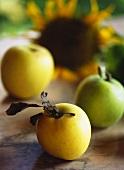 Frische Äpfel vor Sonnenblume