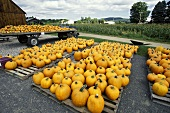 A Very Large Pumpkin Display at a Farm Stand