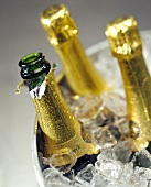 Three Champagne Bottles in Ice Bucket