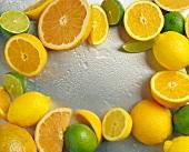 Arrangement of Citrus Fruits in a Frame