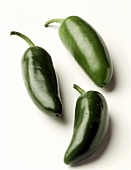 Three green Jalapeño peppers on white background