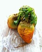 Fresh turnips on plastic bag