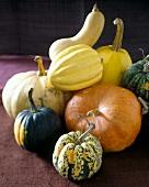 Pumpkin still life with edible & ornamental pumpkins & gourds