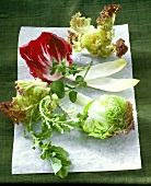 Various types of salad leaves on greaseproof paper