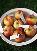 A Bowl of Apples with Tags Showing the Days of the Week