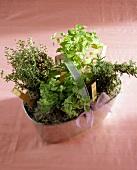 Various herbs in metal basket