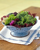 Mixed Salad Greens in a Colander