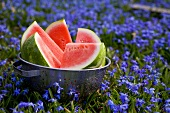 Pieces of watermelon in sieve among blue flowers (outdoors)