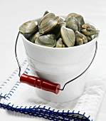 Raw clams in white bucket