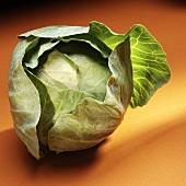 Fresh white cabbage on orange background