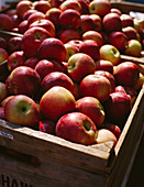 Fresh apples in wooden crates