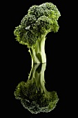 Brokkoli auf schwarzem Untergrund mit Reflexion