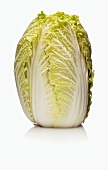 A Head of French Endive