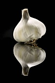 A Bulb of Garlic on Black with Reflection