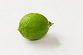 A Key Lime