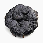 Black Reishi Mushroom