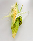 An Ear of Fresh Corn, Husk Pulled Back Partially