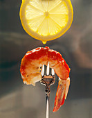 A Shrimp with Cocktail Sauce on a Fork with a Droplet of Lemon Juice Falling from a Lemon Slice