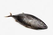 A Whole Tuna Fish