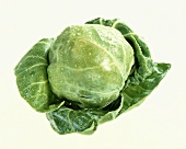 A Brussels Sprout, Close Up