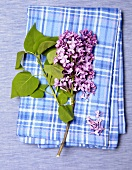 Overhead of Purple Lilac with Leaves on a Blue Plaid Dish Towel