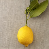 A lemon with leaves
