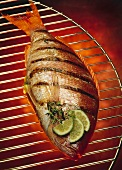 Whole Grilled Red Snapper on Grill Rack; Hot Coals