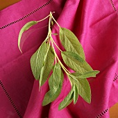 Small Sage Branch with Sage Leaves Over Pink Napkin