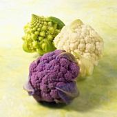 Purple and White Cauliflowers and Romanesco Cauliflower