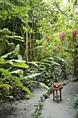 Mangos auf einem Stuhl in tropischer Atmosphäre