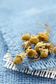 Dried chamomile flowers on blue fabric