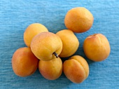 Several apricots on blue background (overhead view)