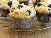 Freshly baked blueberry muffins on cake rack