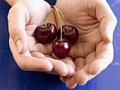 Hands holding three cherries on a stalk