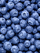 Many blueberries (full-frame)
