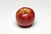 A Single Winesap Apple
