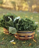 Freshly picked brassicas in baskets