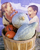 Basket of squashes (Hubbard squash) in front of poster