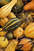 Gourds, Full Frame