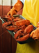 A Fisherman Carrying a Tray of Steamed Lobsters
