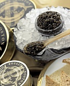 Black Caviar on Ice