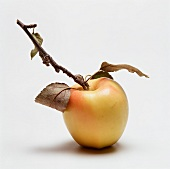 Golden Delicious Apple with Stem and Leaves