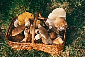 Basket of Wild Mushrooms on the Grass Outdoors