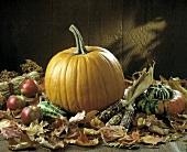 Pumpkin; Autumn Scene