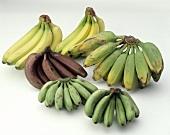 Verschiedene Bananensorten