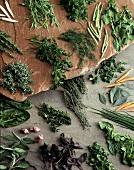 Still Life: Assorted Herbs