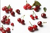 Bing Cherries with Water Drops