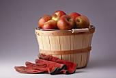 Braeburn Apples in a Bushel Basket; Gloves