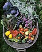 Freshly harvested vegetables in wheelbarrow