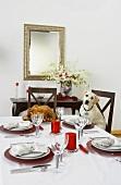 Labrador Sitting at Christmas Table